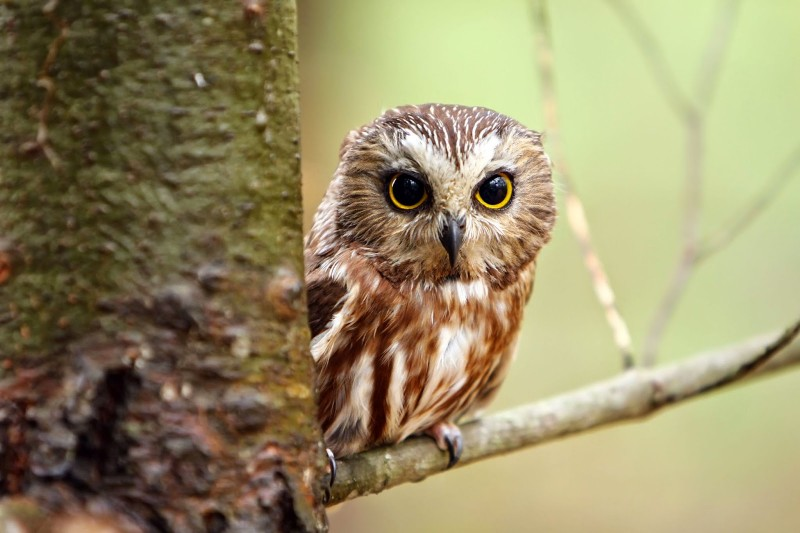 owls mary oliver ap essay Essay content: a common theme throughout much of literature, especially the early horror writings such as those of poe although mary oliver never specifically mentions mortality it is a common theme throughout most of this passage.