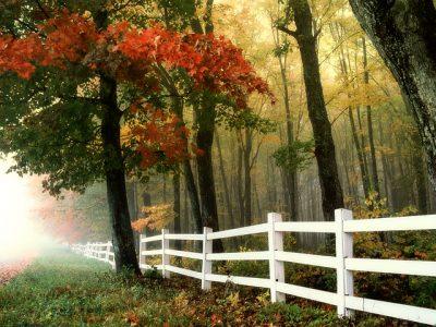 Helping Fall to Linger Longer