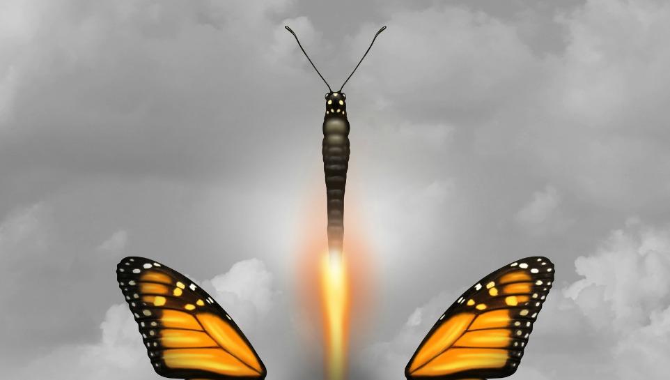 butterfly half
